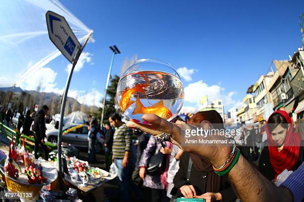 Goldfish await purchase in Tajrish Square to celebrate Nowruz the Persian New Year on March 20 2014 in Tehran Iran Nowruz is calculated according to...
