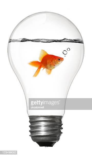 Goldfish Inside a Lightbulb