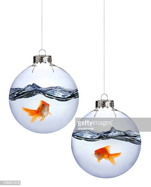 Goldfish Inside Christmas Ornaments