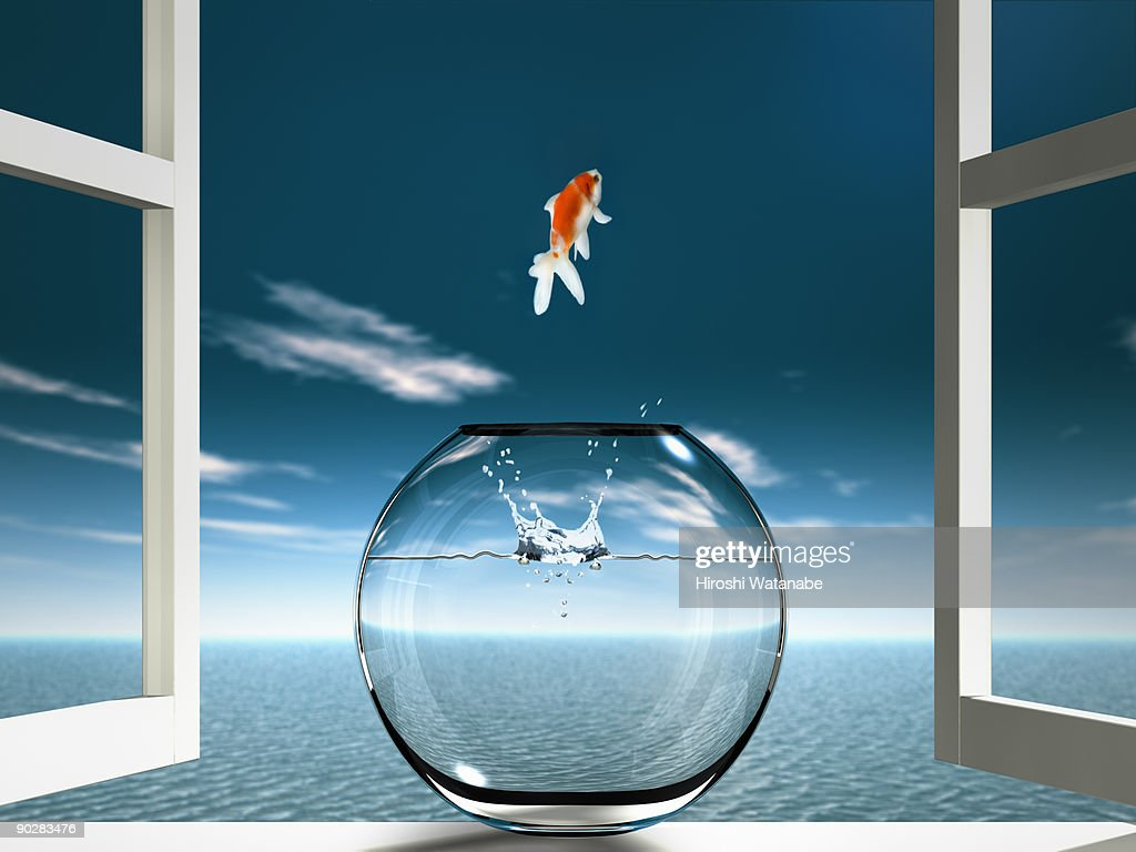 Goldfish  is jumping to sea from fishbowl : Stock Photo