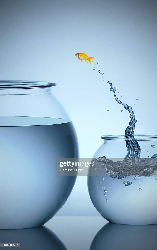 Goldfish jumping from small bowl into big bowl : Stock Photo