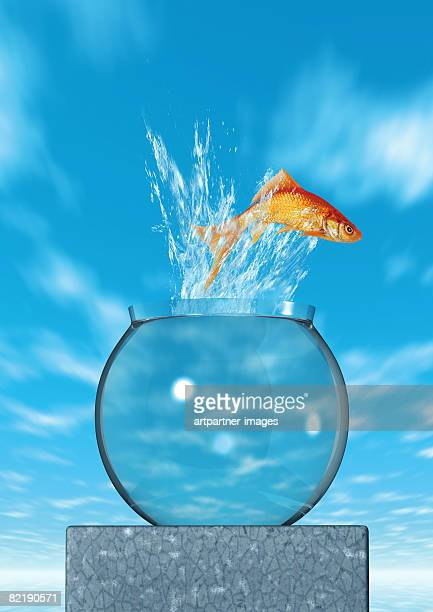 goldfish jumping out of a fish bowl - goldfish leap stock pictures, royalty-free photos & images