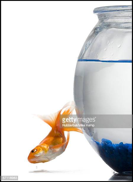 goldfish jumping out of a fishbowl - one animal stock pictures, royalty-free photos & images