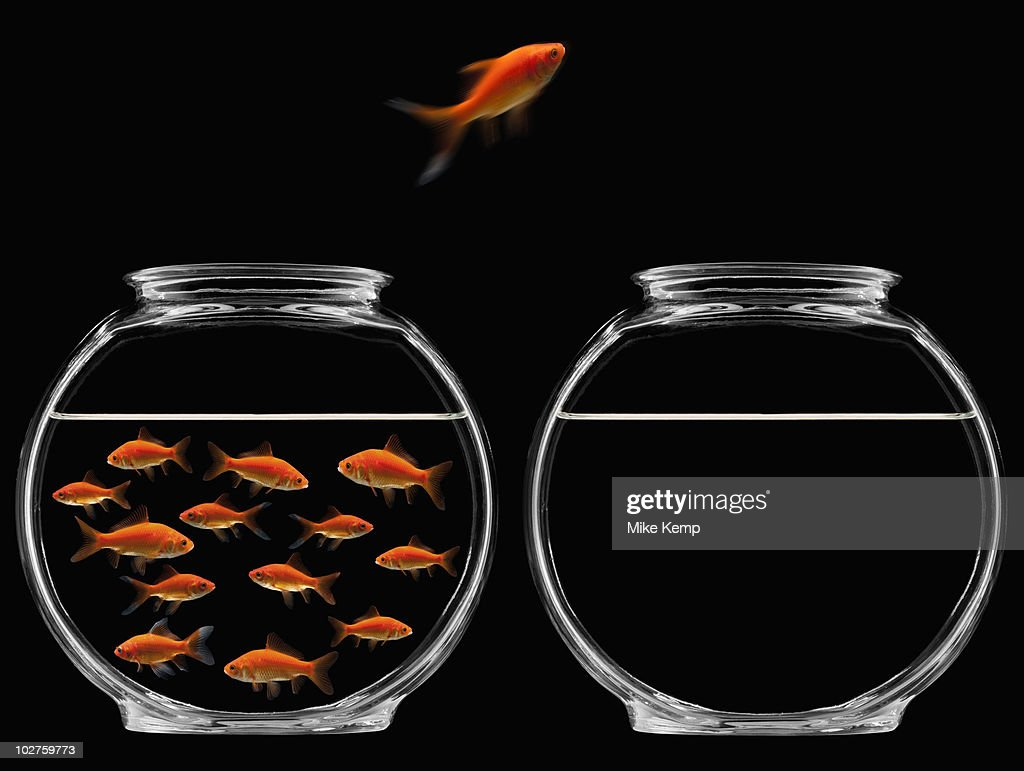Goldfish jumping out of bowl : ストックフォト