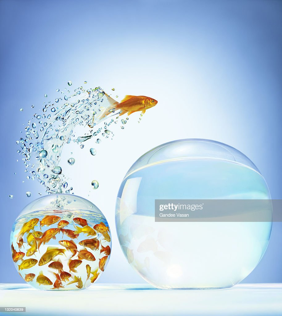 Goldfish jumping out of overcrowded bowl into em : Stock Photo