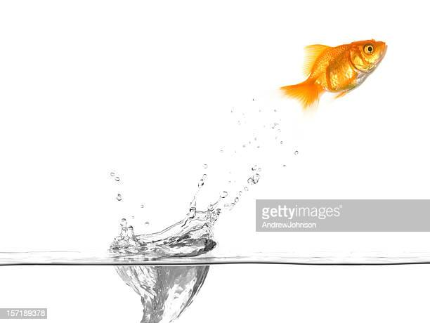 Goldfish Jumping Water Drop