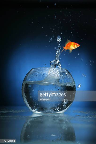 Goldfish jumping with blue light