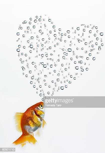 goldfish kisses heart of bubble - fish love stockfoto's en -beelden