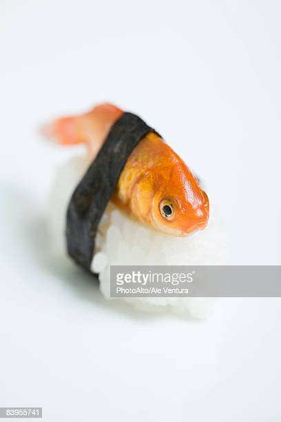 goldfish prepared as nigiri sushi, close-up - nigiri stock pictures, royalty-free photos & images