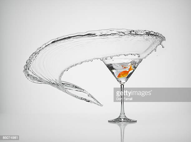 goldfish splash martini - martini glass stock pictures, royalty-free photos & images
