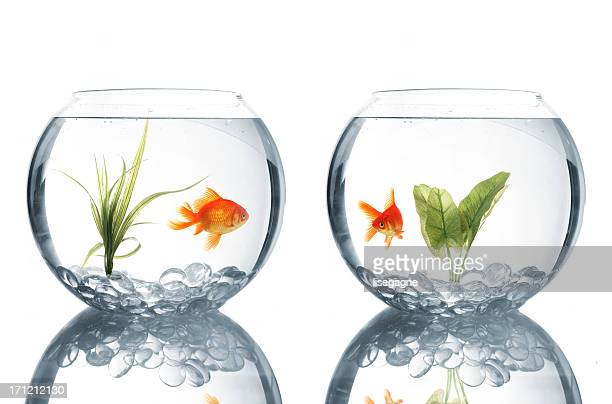 Goldfishes in bowls