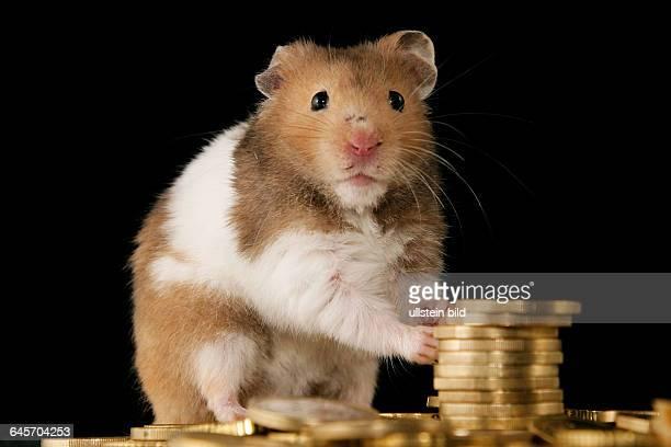 Goldhamster mit Euromuenzen golden hamster with euros