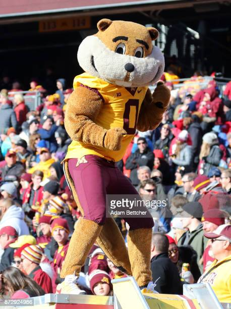 Goldie the Gopher watches the game against the Nebraska Cornhuskers at TCF Bank Stadium on November 11 2017 in Minneapolis Minnesota Minnesota...