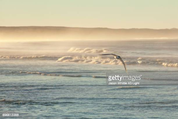 golding mist - whitewashed stock photos and pictures