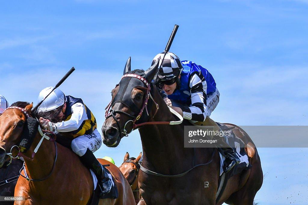 Goldstream (ITY) ridden by Damian Lane wins the Bitalli Handicap at Flemington Racecourse on January 28, 2017 in Flemington, Australia.