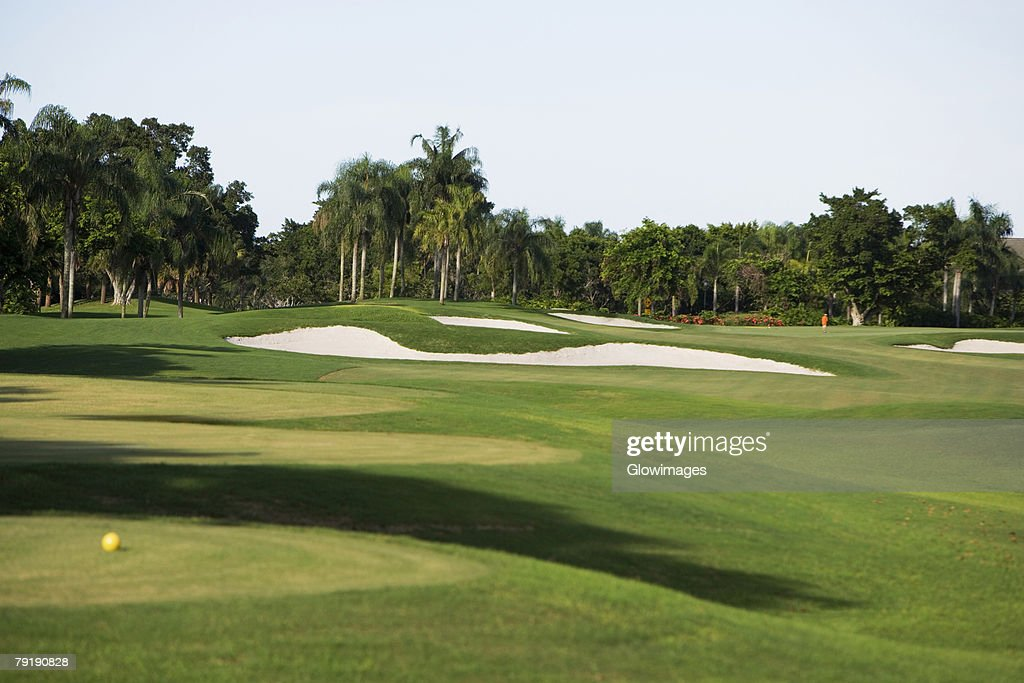Golf ball in a golf course : Stock Photo