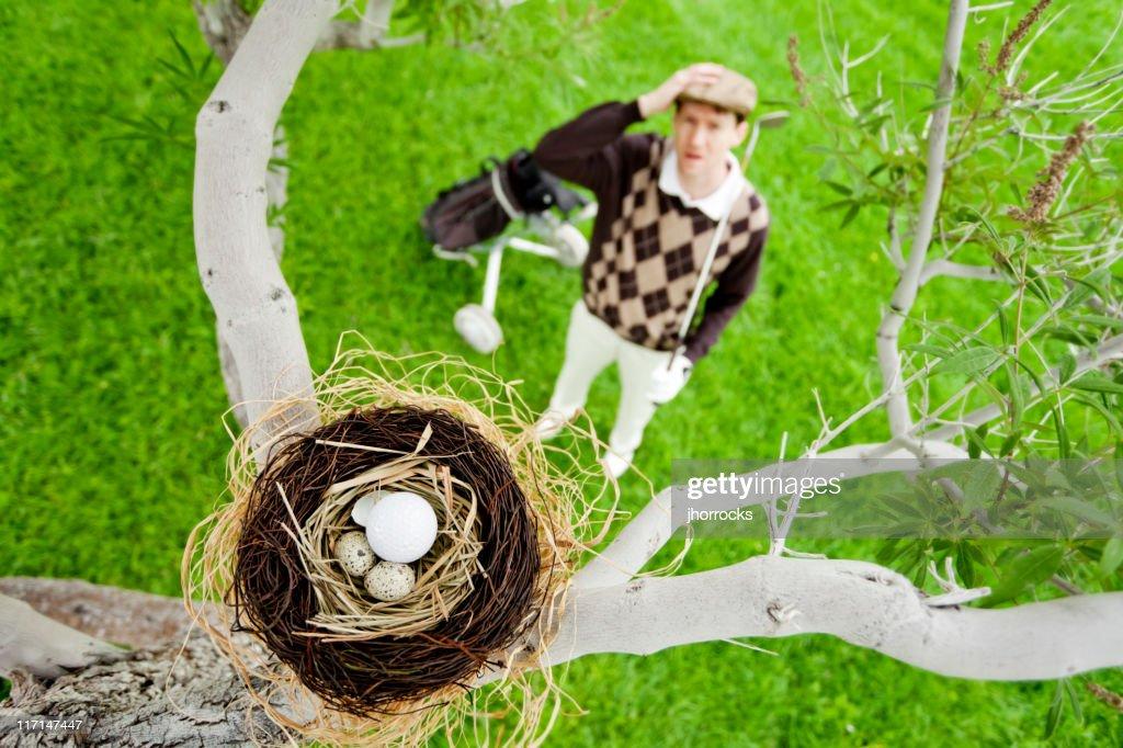 balle de golf dans le nid doiseau photo getty images. Black Bedroom Furniture Sets. Home Design Ideas