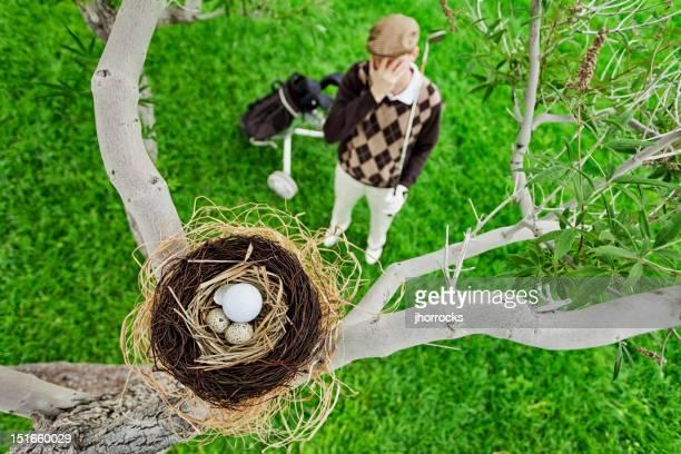 Golf Ball in Bird Nest