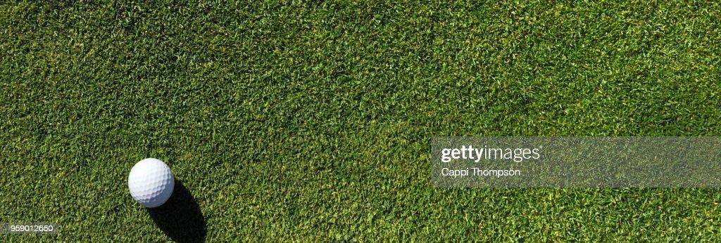 Golf ball resting on bentgrass putting green surface : Stock Photo