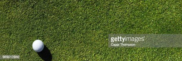 golf ball resting on bentgrass putting green surface - golf background stock photos and pictures