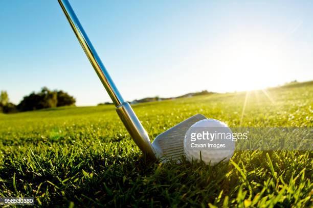 Golf club with ball on grassy field