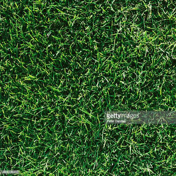 golf course grass - gras stock pictures, royalty-free photos & images