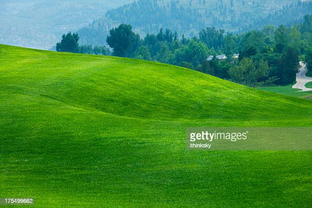 golf course - grass area stock pictures, royalty-free photos & images