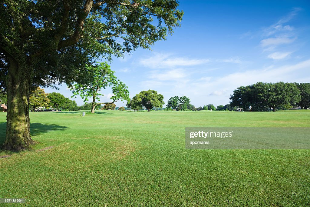 Golf Fields : Stock Photo