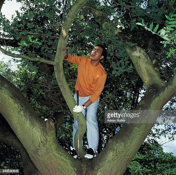 golf player in tree - golf lustig stock-fotos und bilder