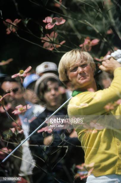 The Masters Double exposure portrait of Jack Nicklaus in action drive behind image of Pink Dogwood flowers during Thursday play at Augusta National...
