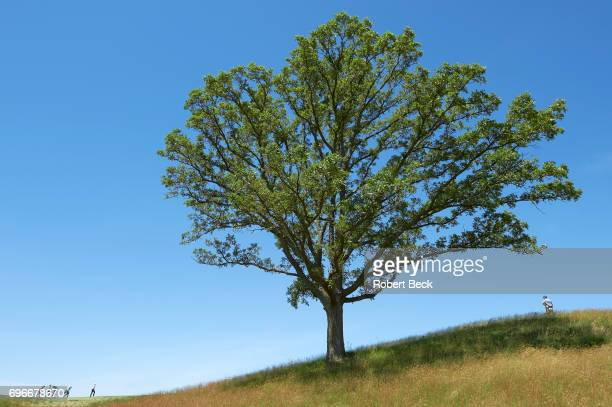Overall view of Xander Schauffele and Trey Mullinax wlaking beside large tree during Friday play at Erin Hills GC. Hartford, WI 6/16/2017 CREDIT:...