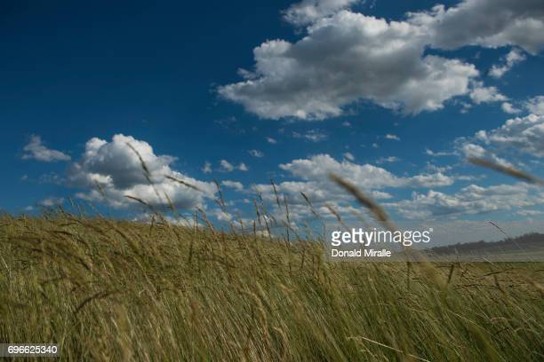 US Open Scenic view of fescue on course during Thursday play at Erin Hills GC Hartford WI CREDIT Donald Miralle