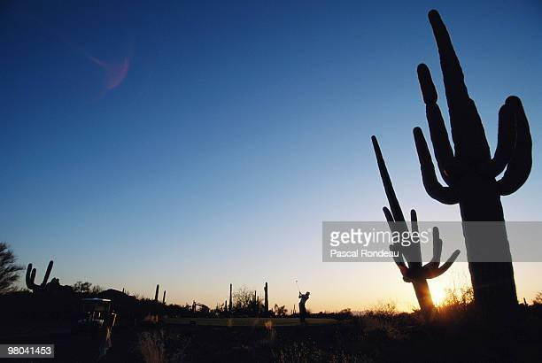 A golfer plays a stroke amidst the rising sun and cactus of the desert on 8 March 1990 at the Troon North Golf course in Scottsdale Arizona United...