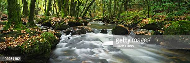 golitha falls, cornwall, england - nautre stock pictures, royalty-free photos & images