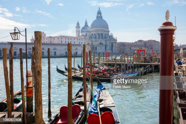 gondolas on grand canal near saint maria della salute church, venice, veneto, italy - gondola traditional boat stock pictures, royalty-free photos & images