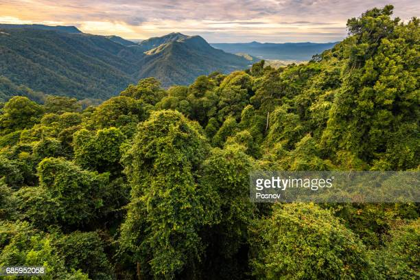 Gondwana Rainforest at Dorrigo National Park, New South Wales