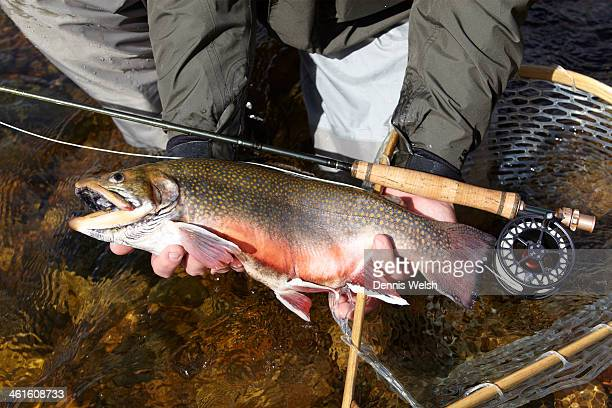 gone fishing... - speckled trout stock photos and pictures