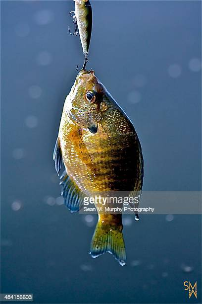 gone fishing... - crappie stock pictures, royalty-free photos & images