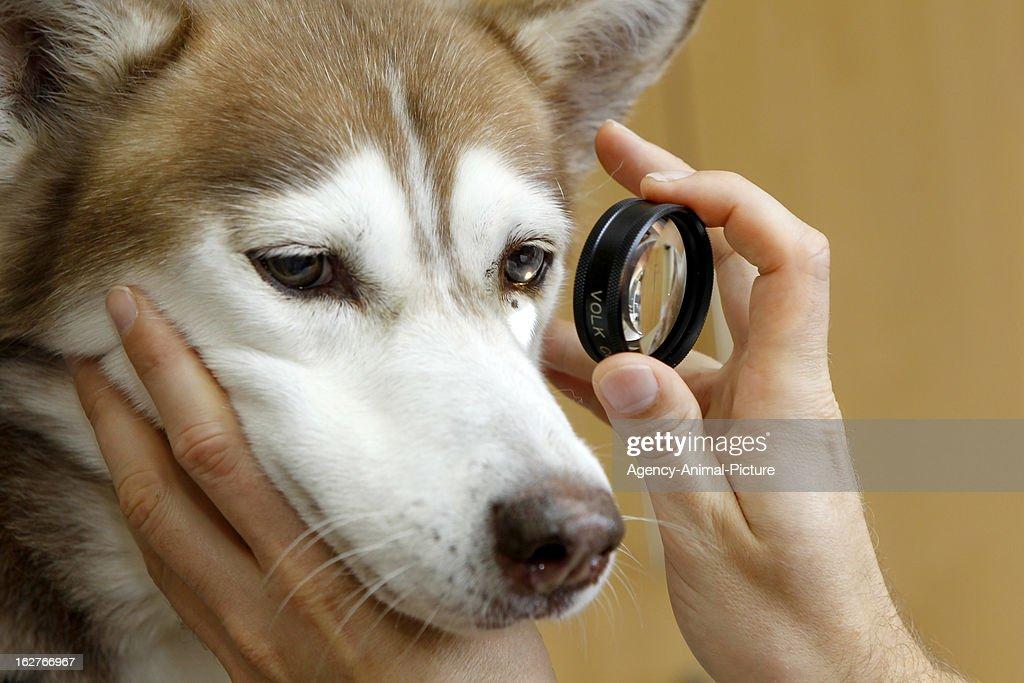 Pets Eye-Diagnostic : News Photo