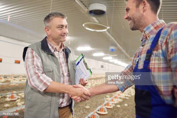 Good deal between two farmers. Debica, Poland