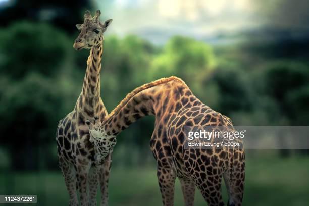good friends - 動物園 ストックフォトと画像