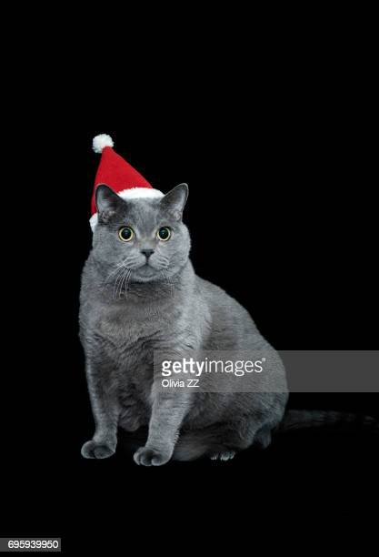 A good looking cat wear a Christmas hat