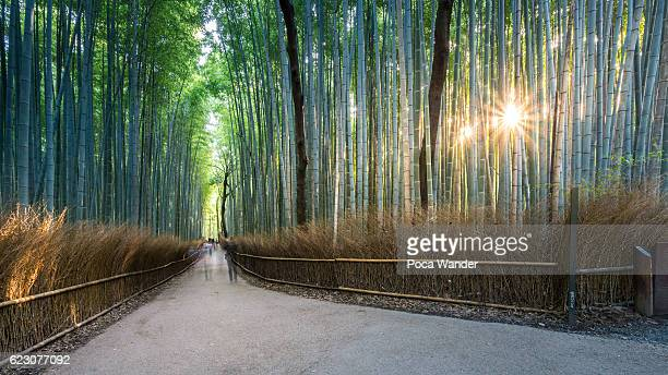 Good morning, Bamboo forest, Kyoto