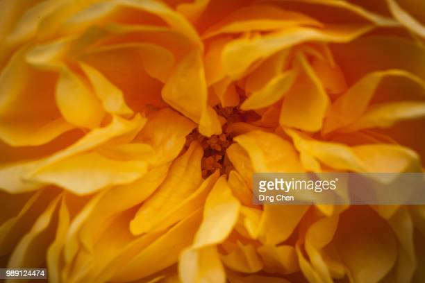 60 Top Good Morning Flowers Pictures, Photos and Images - Getty Images