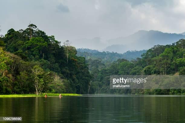 good morning from royal belum rain forest park. - shaifulzamri stock-fotos und bilder