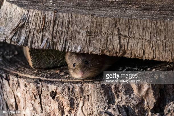 good morning little mouse!