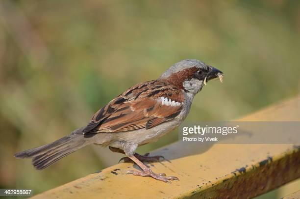 Good Morning Sparrow