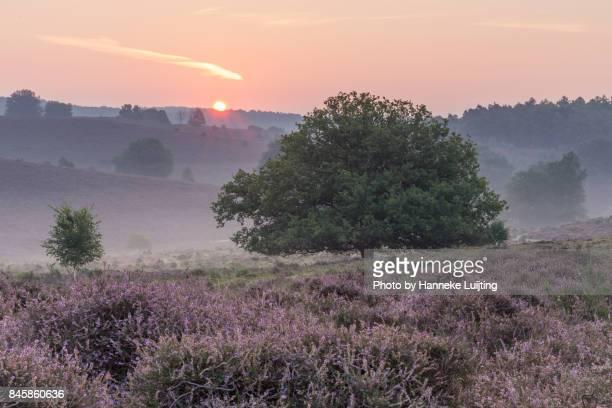 good morning sunshine - veluwezoom national park - posbank ストックフォトと画像
