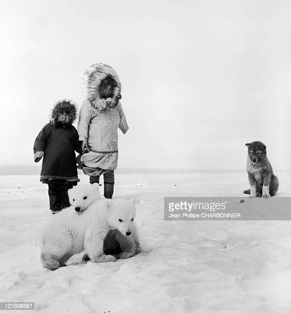 Good Old Dog And Two Teddybears Not Stuffed Wainwright Alaska