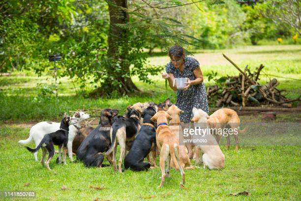 good rescued dogs waiting for food - animal shelter stock pictures, royalty-free photos & images